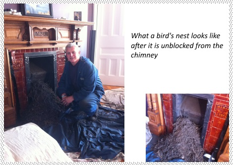 bird nest removal chimney sweep cardiff-south-wales